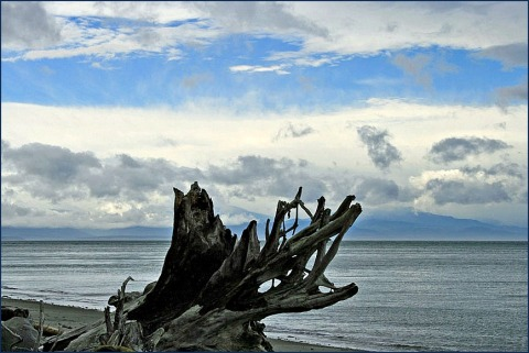Driftwood on West Beach